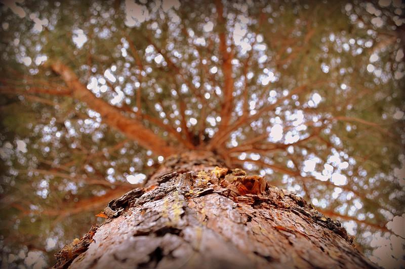 Pine tree worms perspective. photo