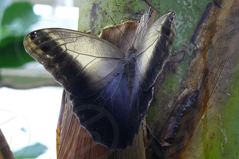 insects butterfly Lepidoptera photo
