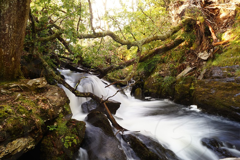 Moving water • river • stream • fallen trees • woods • forest photo