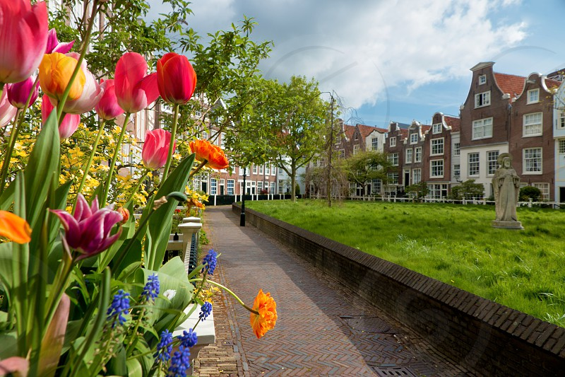 Surface View Plant Part Bulb Flower Leaf Urban Scene Outdoors Spring Day  spring flowerspring seasonal dutch the Netherlands photo