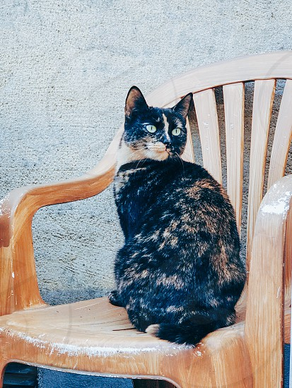 Cute cat sittning  unusual chair outdoors furniture face portrait  whisker photo