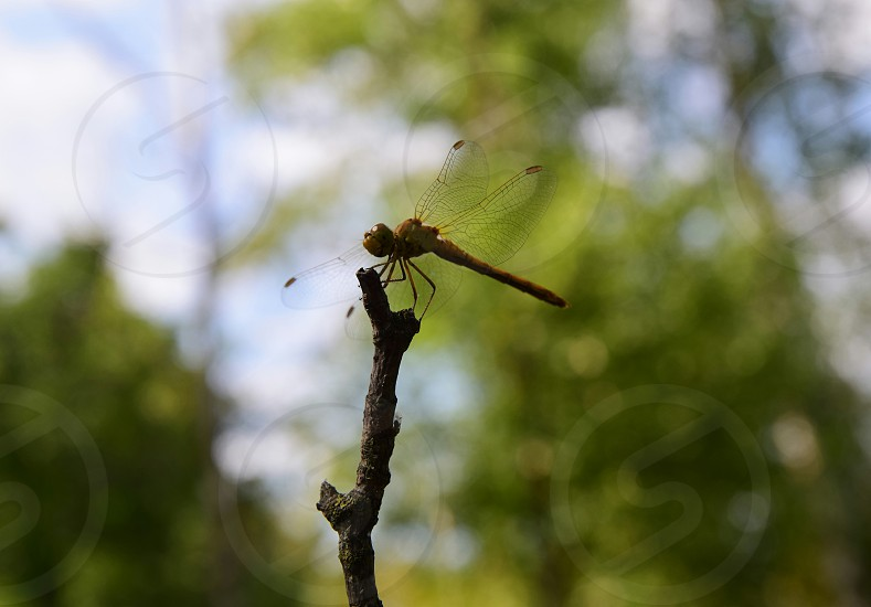 shallow focus photography of brown dragonfly during daytime photo