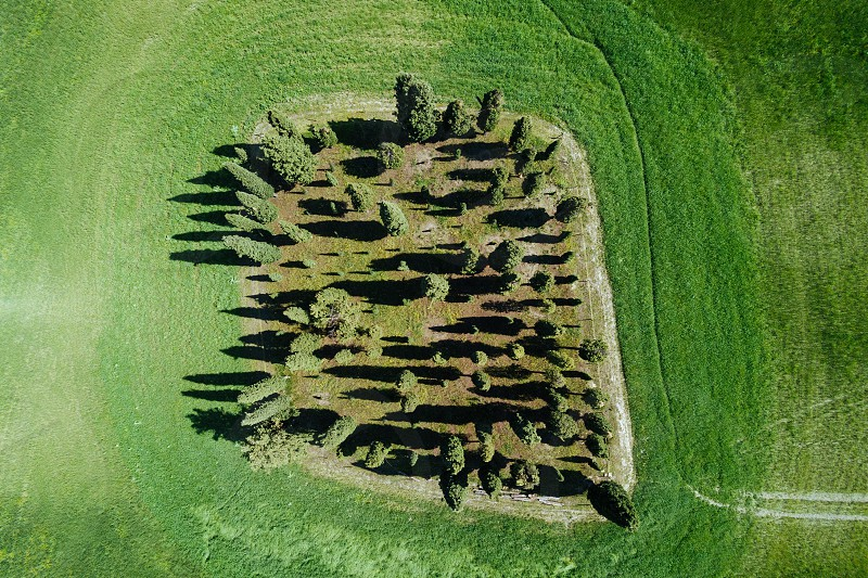 Aerial view of the Tuscany cypress landscape in springtime  photo