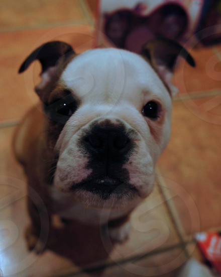 Puppy nose photo