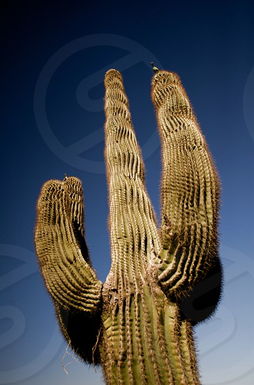 america arid background blue botany bright brown cactus colorful day desert desolate dry environment europe exotic farm field food fruit green health heat hot isolated landscape leaf life mountain natural nature nobody organic outdoor park pear plant prickly sand season single sky south summer sunny travel tree tropical vacation white photo