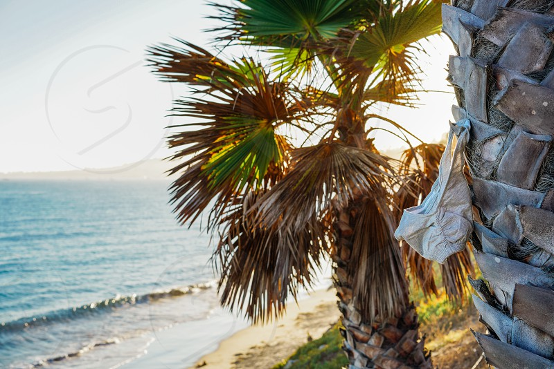 green palm tree on beach front during sunset photo