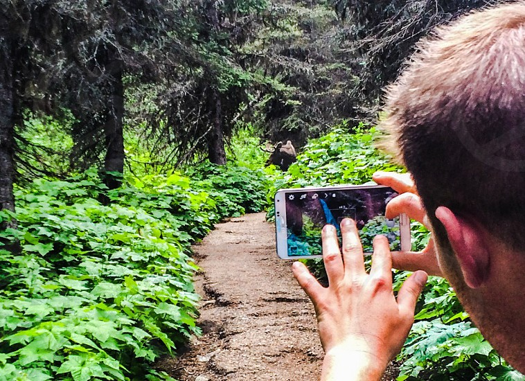 Moose sighting on the trail to grinnell lake glacier park Montana  photo