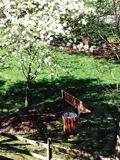 Tree blossom grass trash can bench fence photo