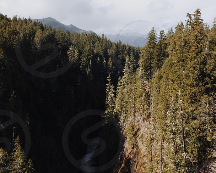 pine trees on mountains and river  photo