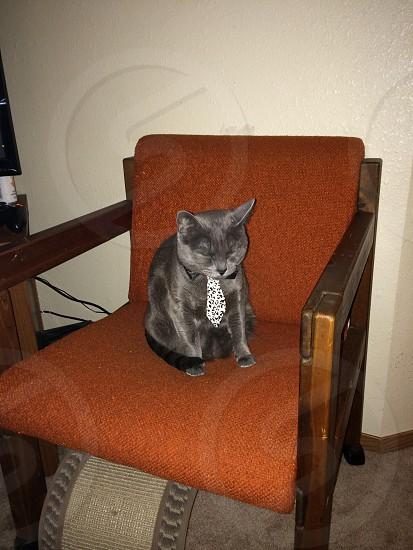 Sassy cat photo