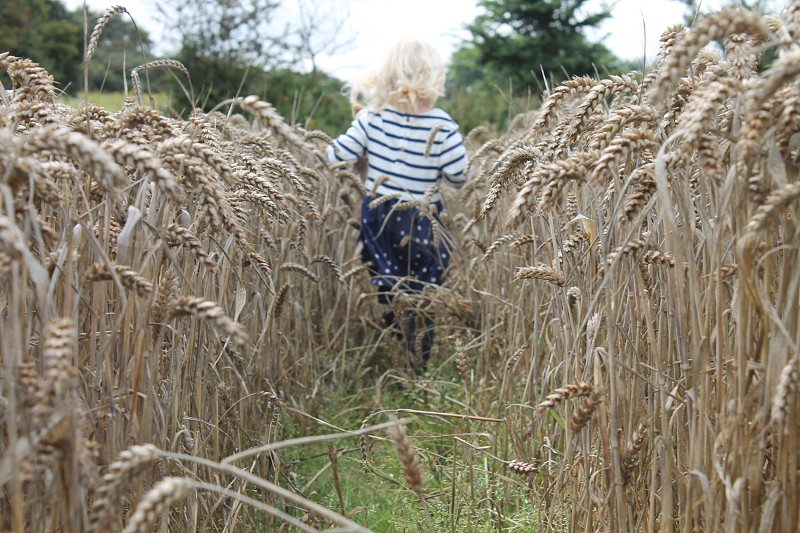 girl in white and black stripe long sleeve shirt and blue bottoms walking in between wheat field under clear blue sky during daytime photo