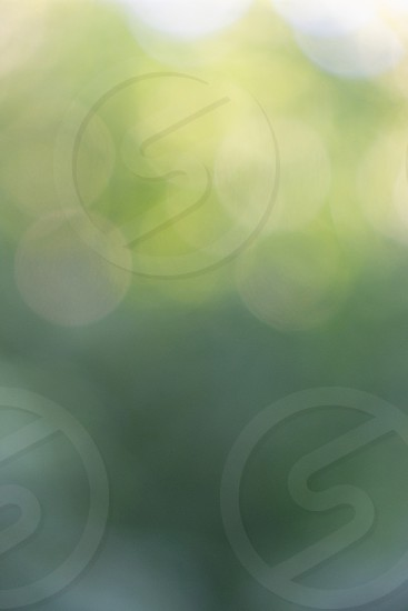 Abstract green yellow blurred bokeh background. Beautiful layout photo