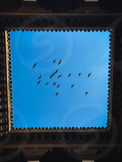 Architecture geometry Sky blue birds square hole ceiling pattern building flying photo