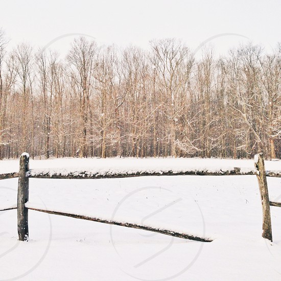snow covered ground and trees photo