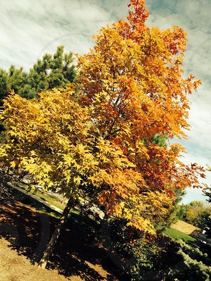 Beginnings of fall photo