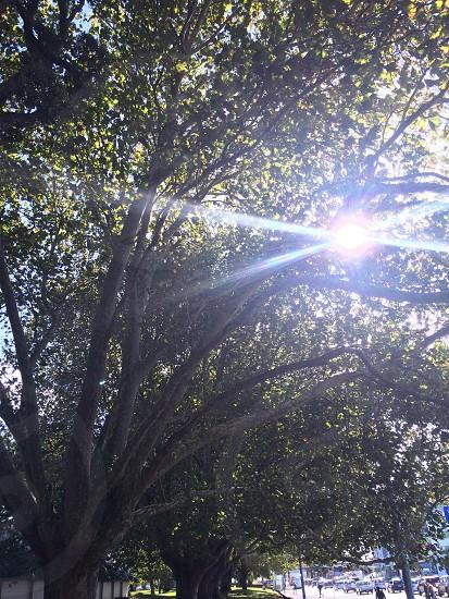 Sun through tree photo