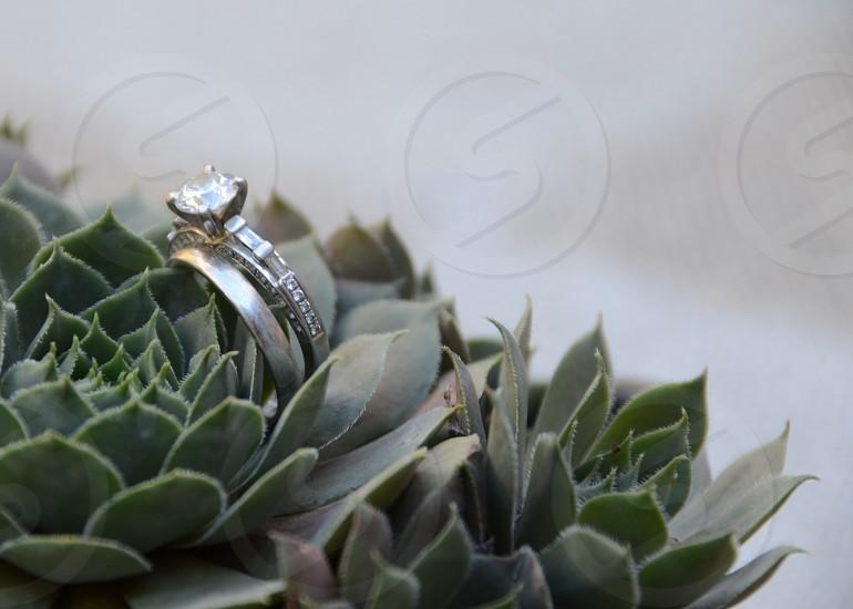 Wedding rings diamonds platinum succulent  photo