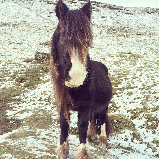 Mountain pony photo