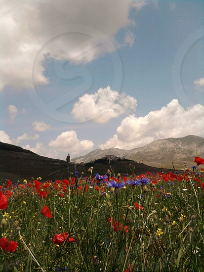 Castelluccio di Norcia Umbria Italy photo