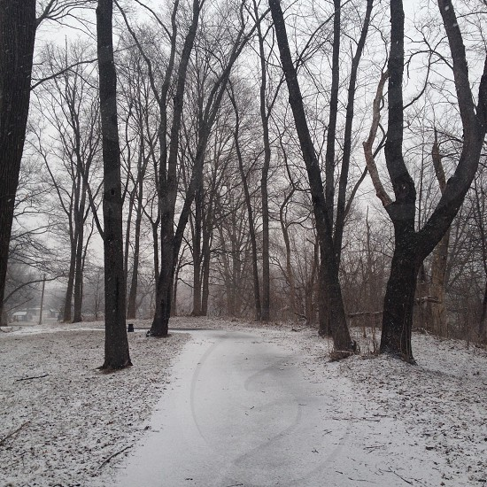 snow covered walk way beside the trees photo