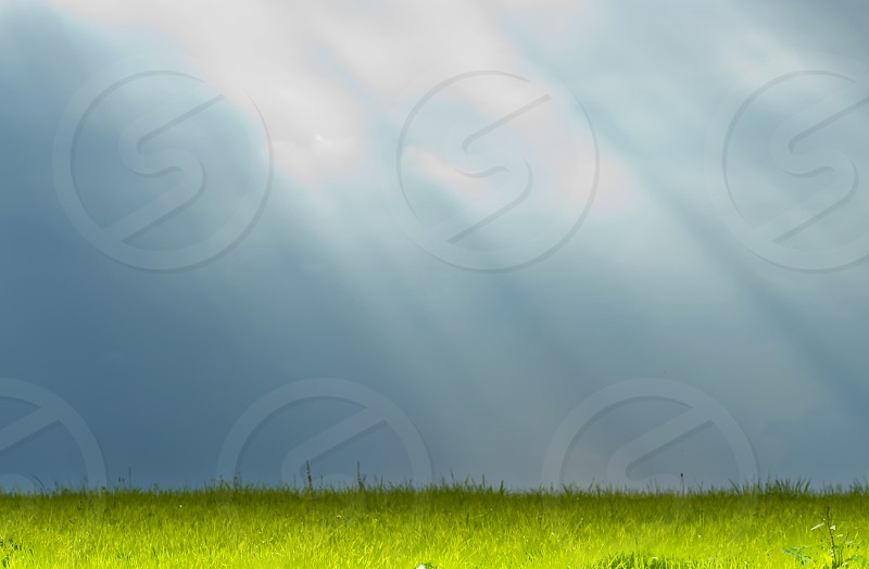 sunlight beams on a meadow photo