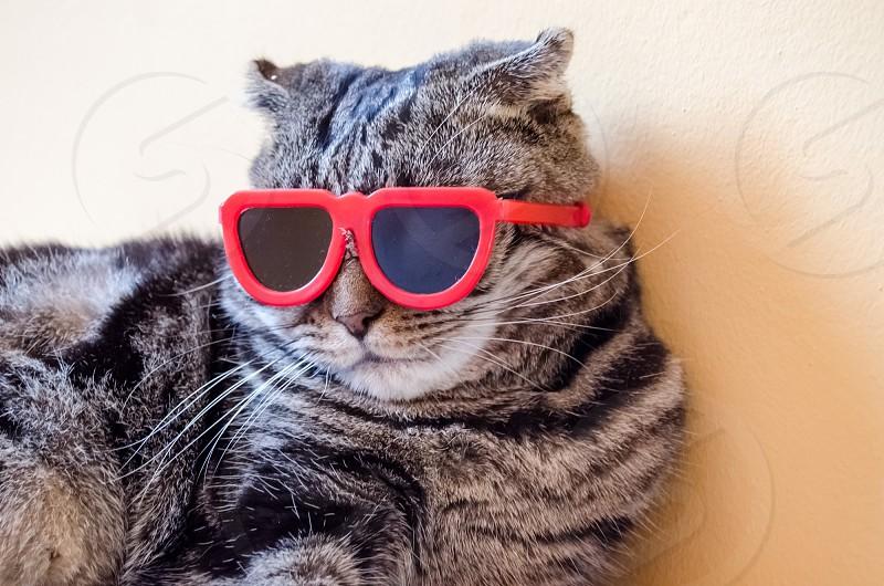 plastic red frame sunglasses photo