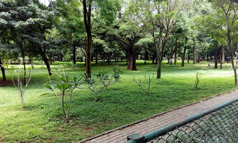 Bangalore garden photo