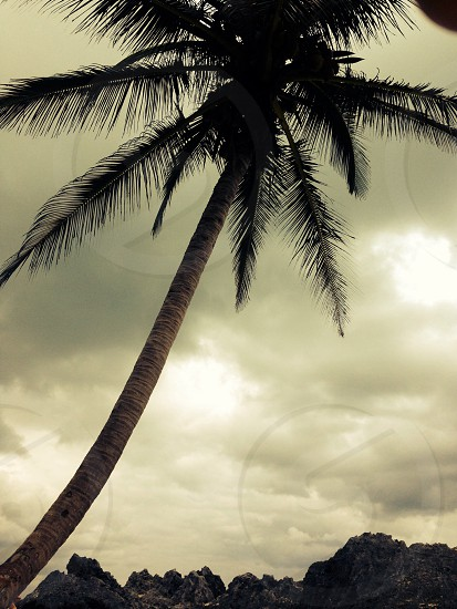 white clouds over palm tree photo