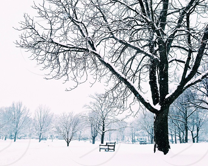 Bench under a tree. Everything is covered with fresh snow. Landscape. Nature  photo
