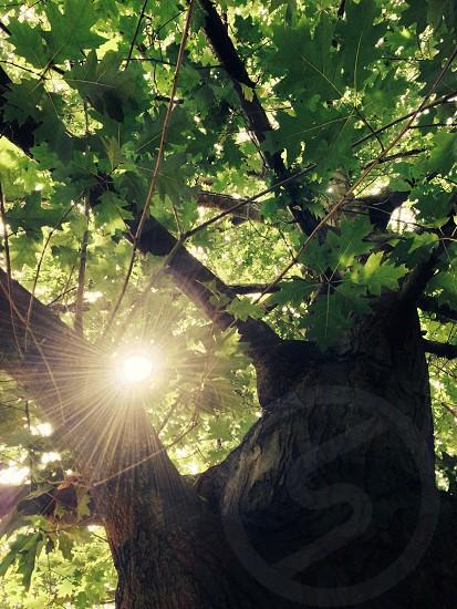 photography of green tree photo