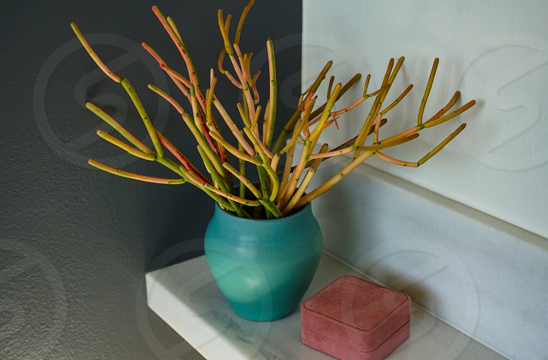 Living coral 2019 color of the year adds a warm accent to a modern bath via tones in a decorative box and a plant that suggests undersea life. photo