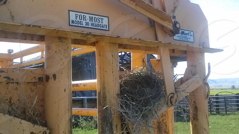 Bird Nest photo