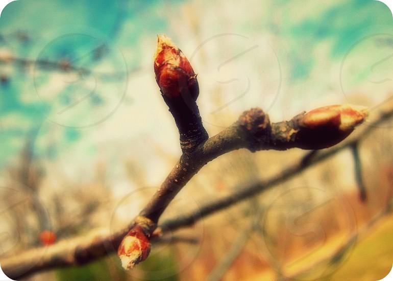 Spring budding tree sky photo