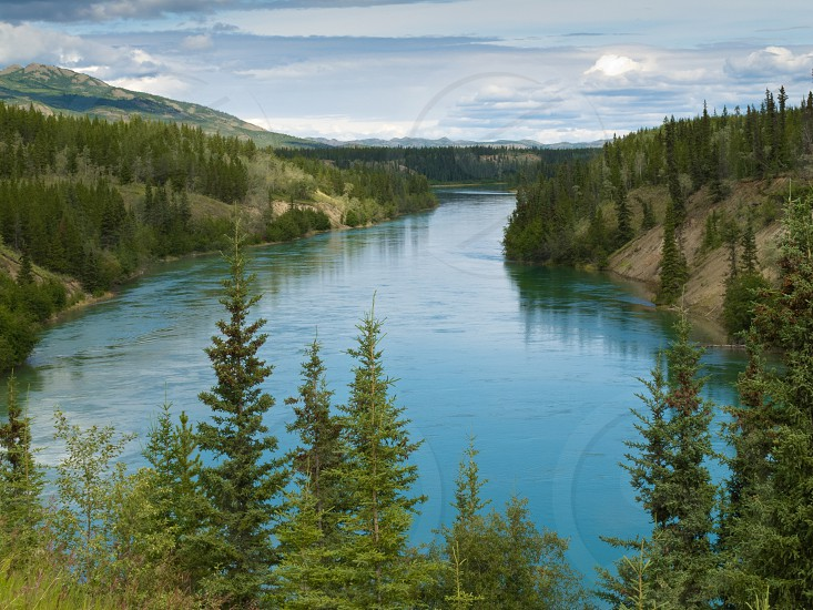 Yukon River just north of Whitehorse  Yukon Territory  Canada  a major stream and waterway in Alaska and the Yukon photo