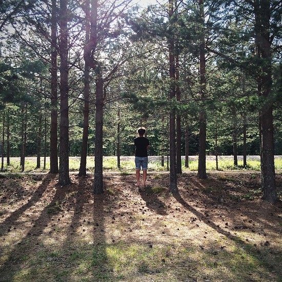person standing under trees photo
