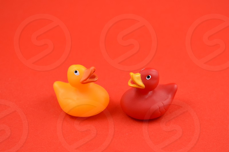 Rubber duck. Toy rubber duck isolated on a red background. Red and yellow rubber duck photo