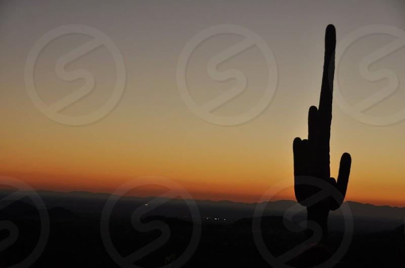 Cactus Sunset photo