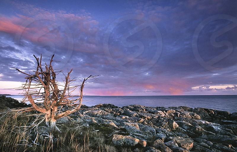 Off Seeley's Cove Seeley's Cove New Brunswick coast bay of fundy fundy shore dead tree rocky coast rocky shore. photo