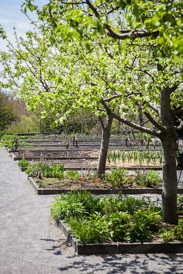 Small garden orchard in the spring. photo