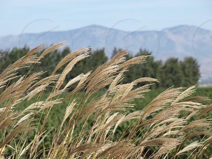 mountains grasses wind california photo