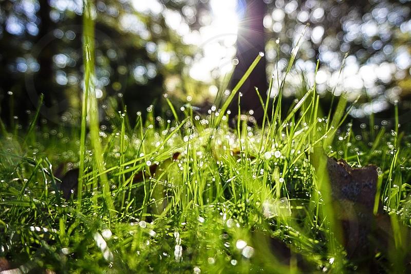 Morning dew photo