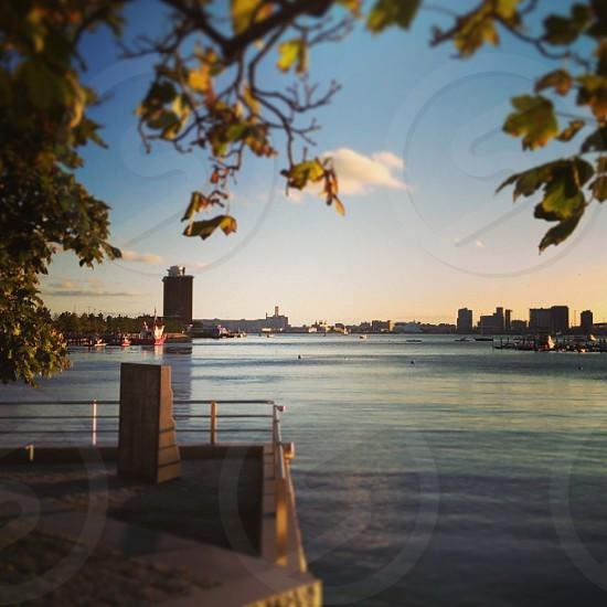 Boston Harbor with sculpture through trees East Boston MA photo