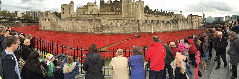 Remembrance Day poppies Tower of London photo