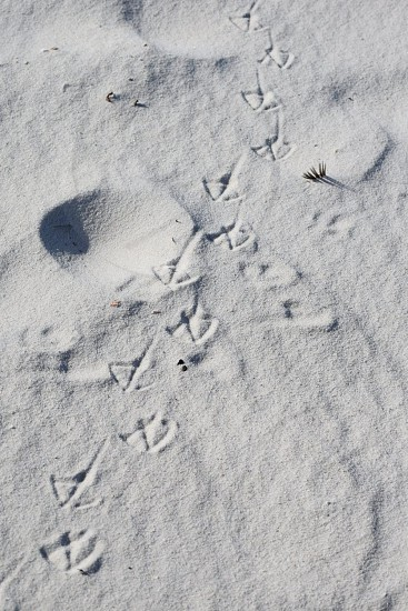 Bird Prints in the Sand photo