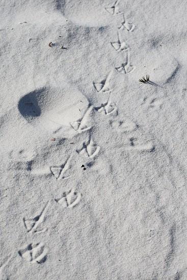 Bird Prints in the Sand photo