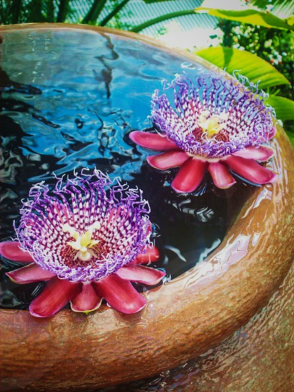 Flowers Smiling water  photo