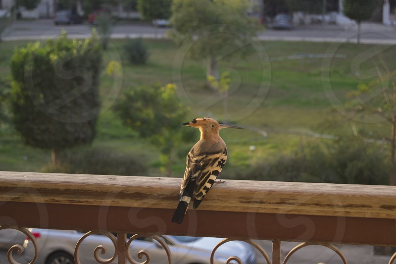 This guy was in my balcony <3 photo