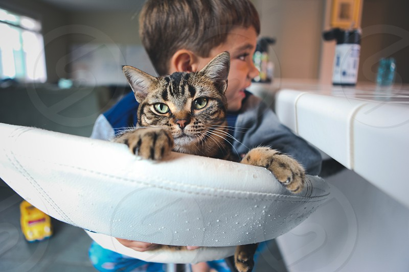 brown and black tabby cat in white chair held by male child beside table photo