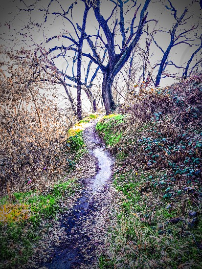 Hiking / jogging / mountain bike trail in the woods w/filter photo