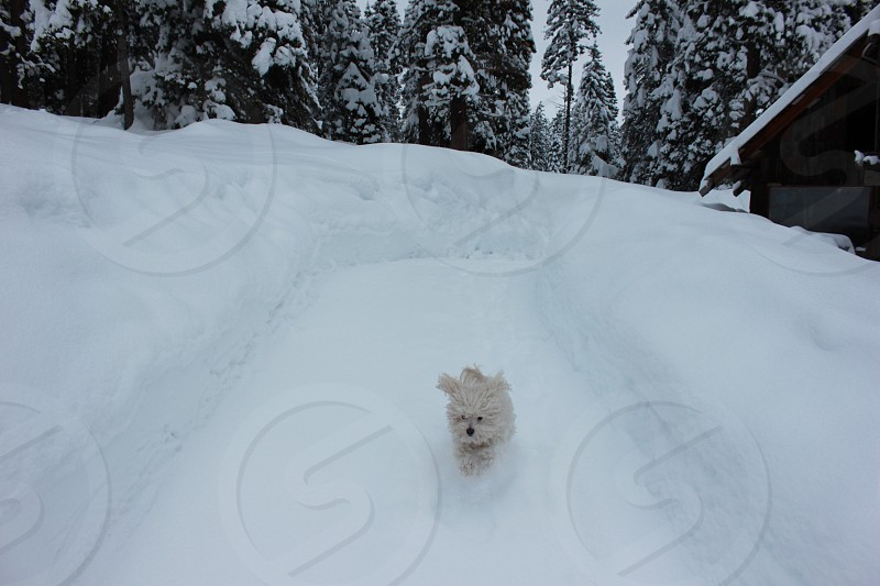white long coated dog walking on snow covered land surrounded with trees during daytime photo